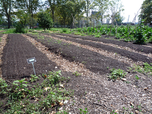 Urban Farming: A Small-Scale Solution to a Full-Scale Problem