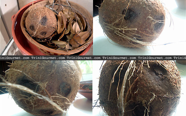 The Many Faces of the Coconut